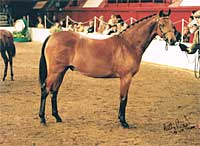 Mat as a yearling at HOYS